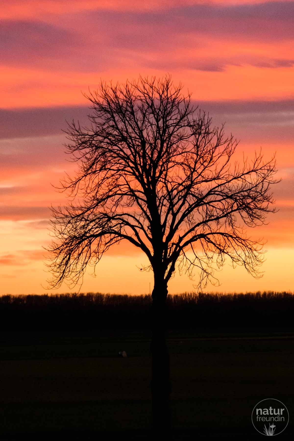 Sonnenuntergang im Marchfeld