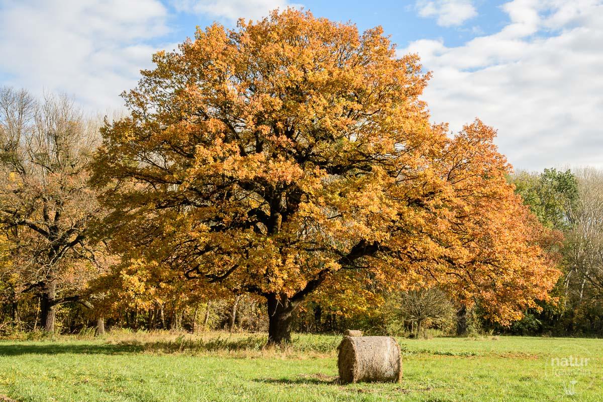 Herbst im Nationalpark Donau-Auen