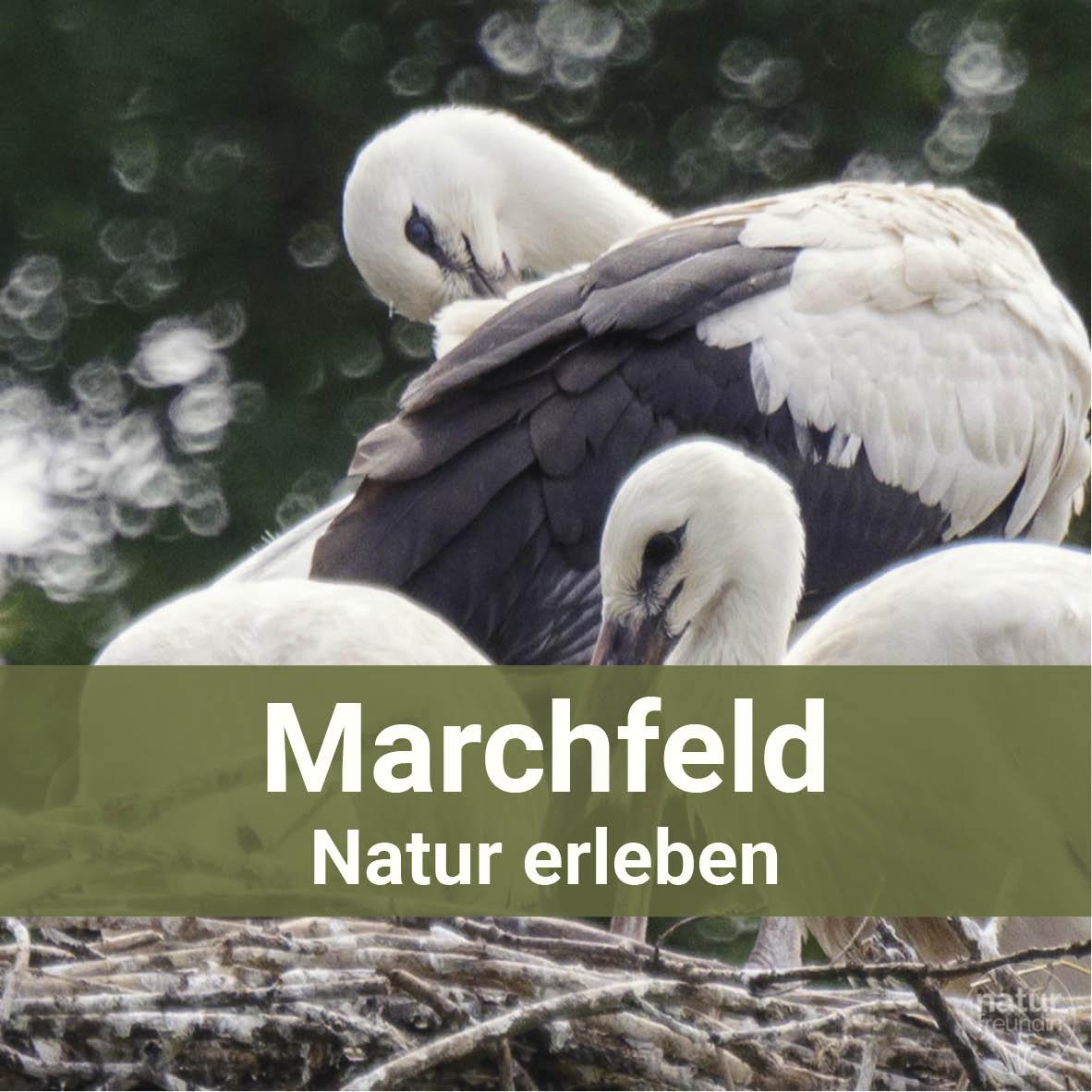 Natur erleben im Marchfeld