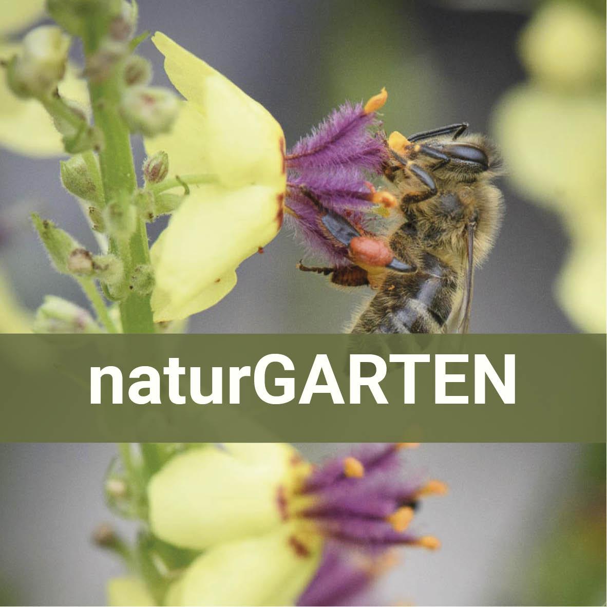 Naturgarten - Pflanzen, Tiere und Tipps