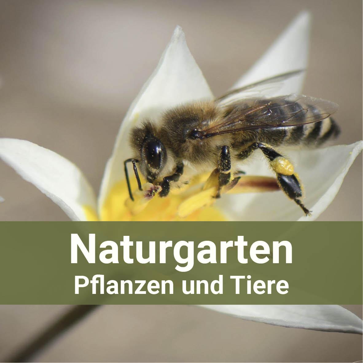 Naturgarten im Marchfeld