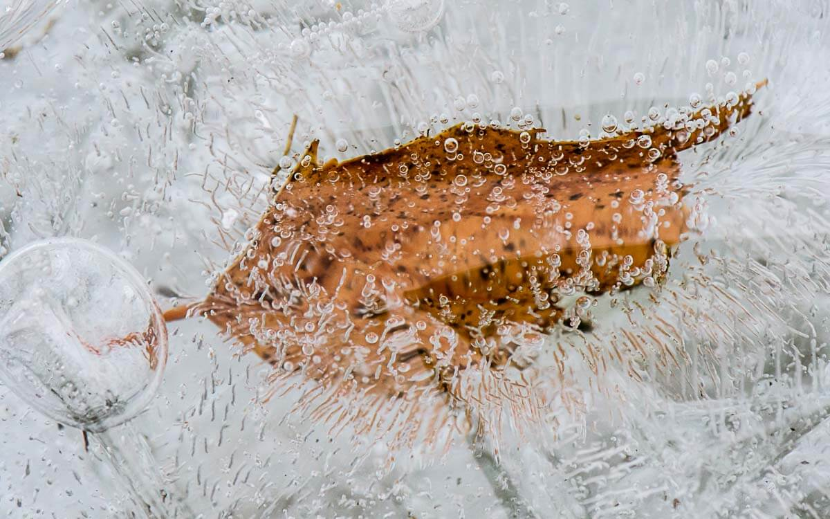 Im Eis gefangenes Herbstblatt
