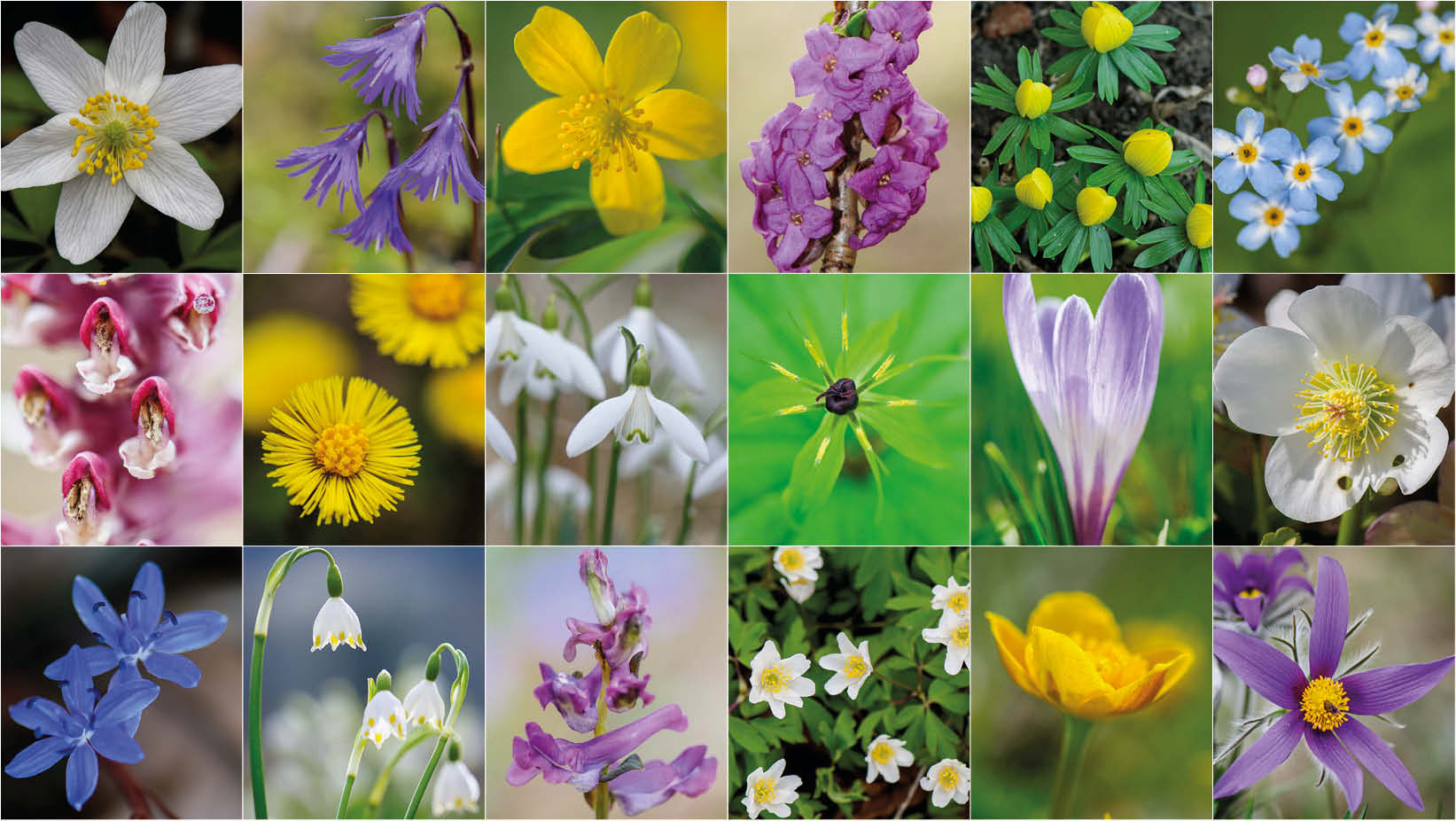 Frühlingsblumen - in Wort und Bild