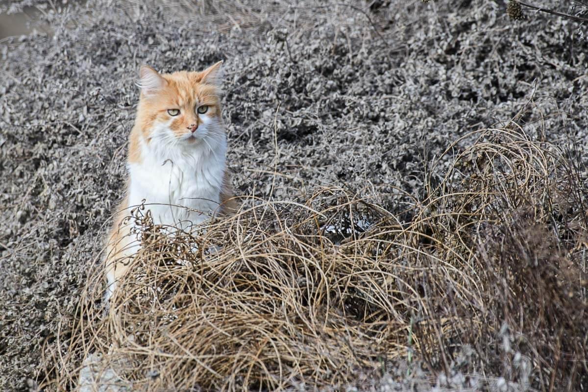 Katzenbesuch im winterlichen Naturgarten
