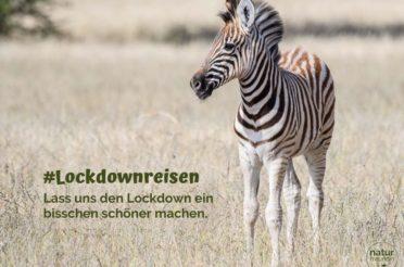 Lockdownreisen – online die Welt bereisen