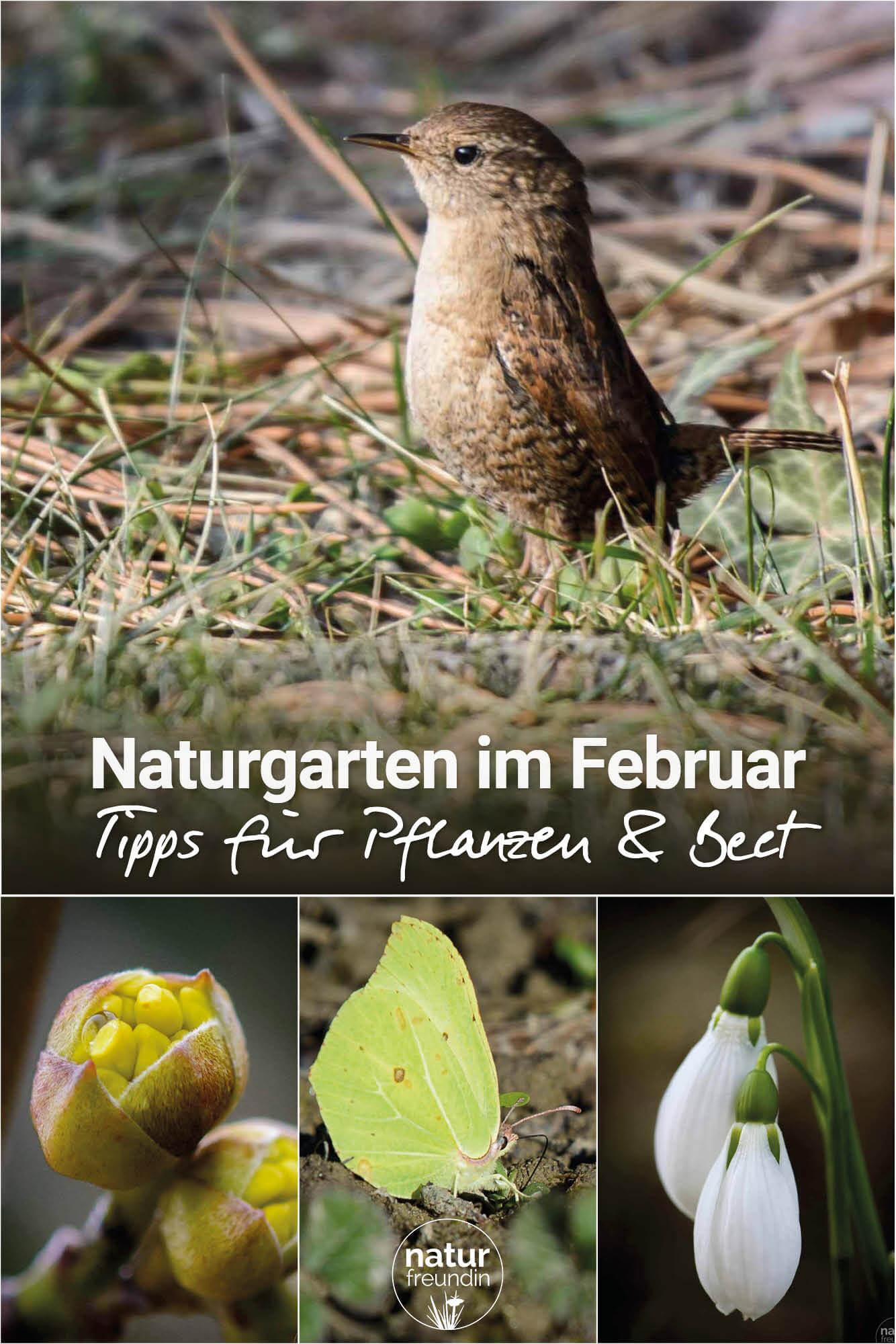 Naturgarten im Februar