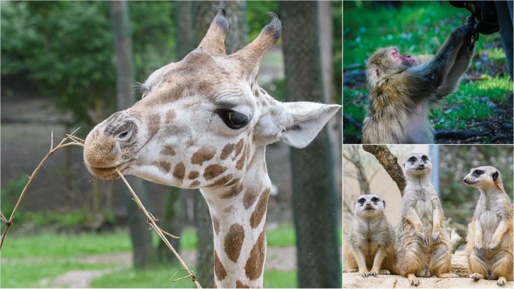 Tiergarten, Zoo, Wildparks in Österreich
