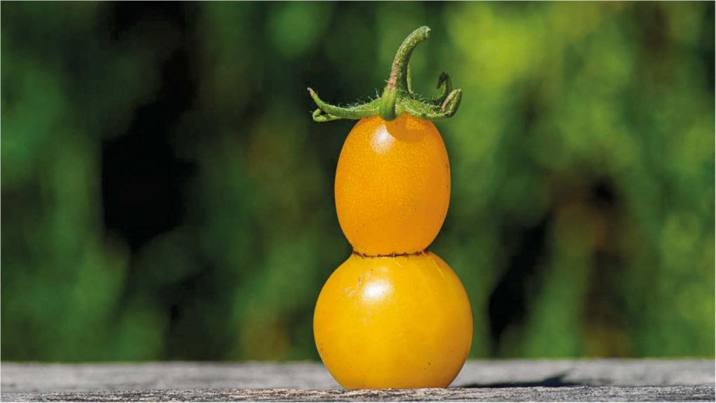 Tomaten oder Paradeiser?